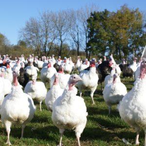 Buchanan's Farm